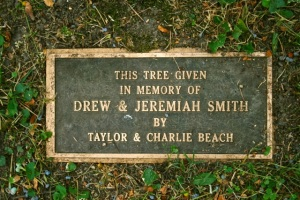 LexingtonCemeteryBeachTree2014